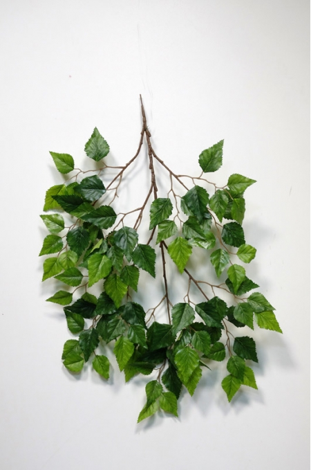 Ветки лиственных деревьев