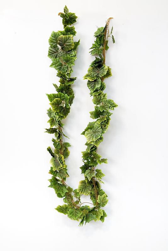 Декоративные растения плющи и лианы